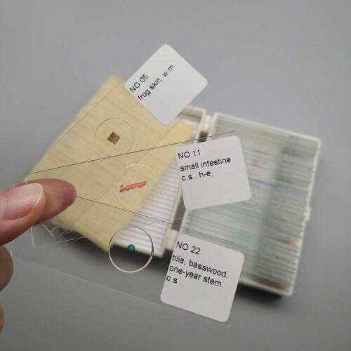 prepared-microscope-slides-30pcs-set