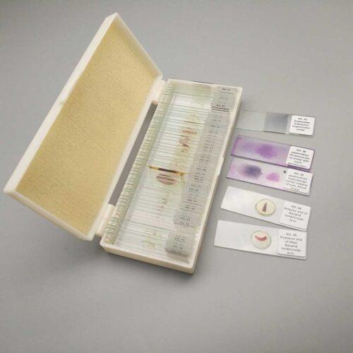 medical parasitology slides