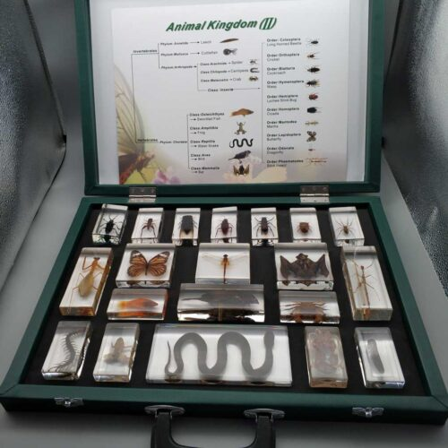 Animal Kingdom embedded specimen