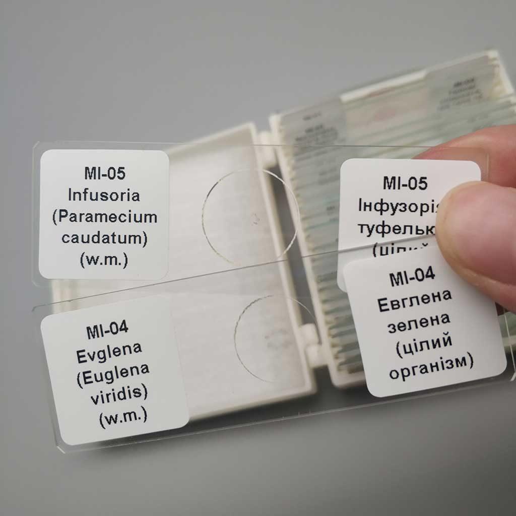 multi-language-label-prepared-slides