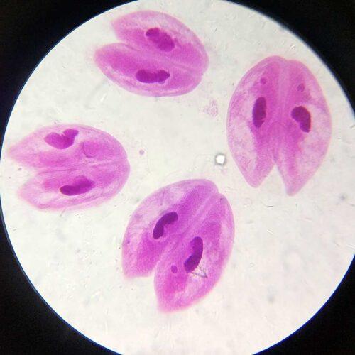 Affordable 100pcs advanced zoology microscope prepared slides 1